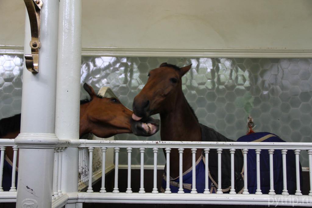 Лошадки в Королевских конюшнях в Лондоне
