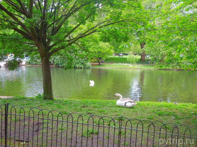 Повсюду у озера такие оградки, чтобы люди не пугали птиц