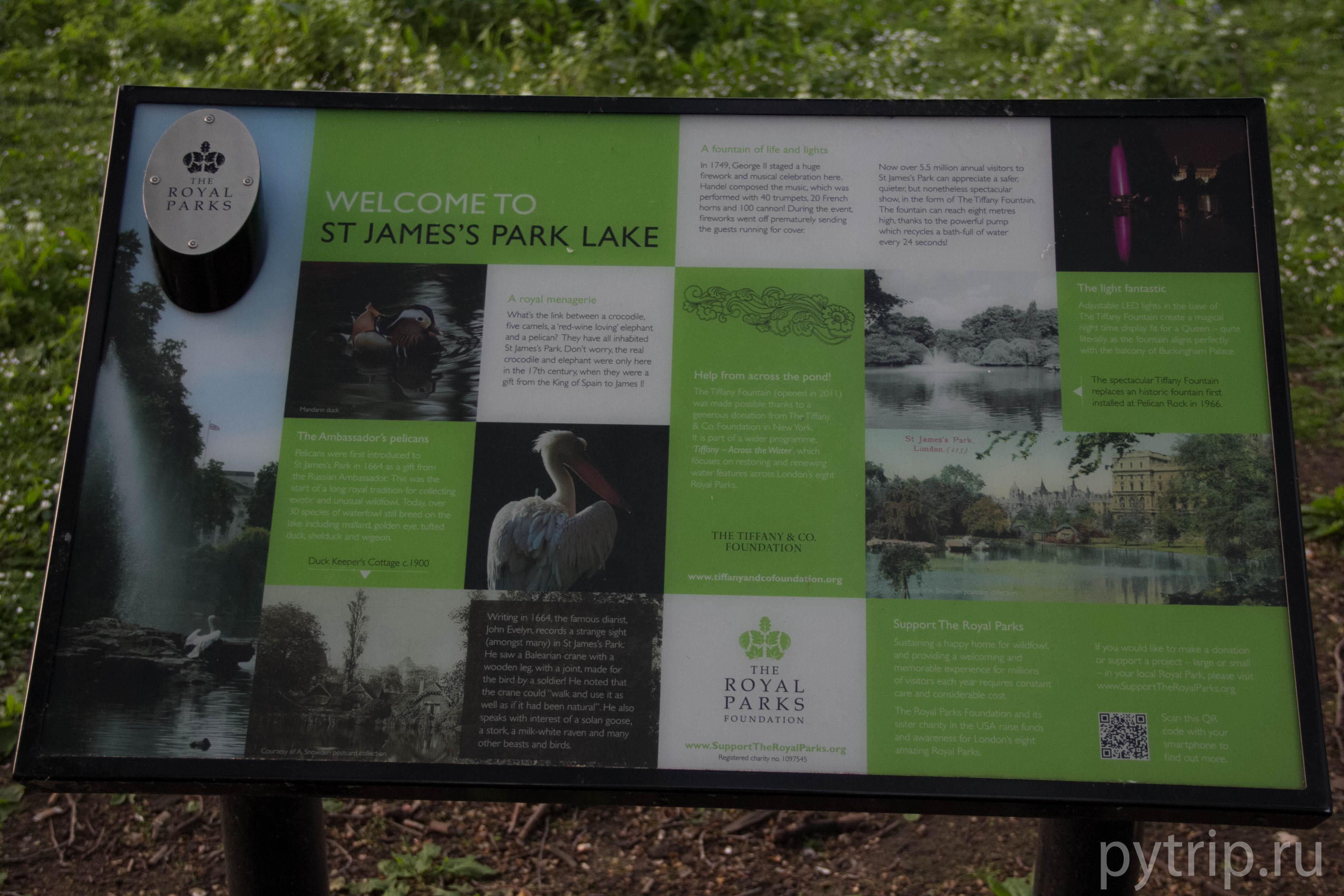 птицы в парке Лондона