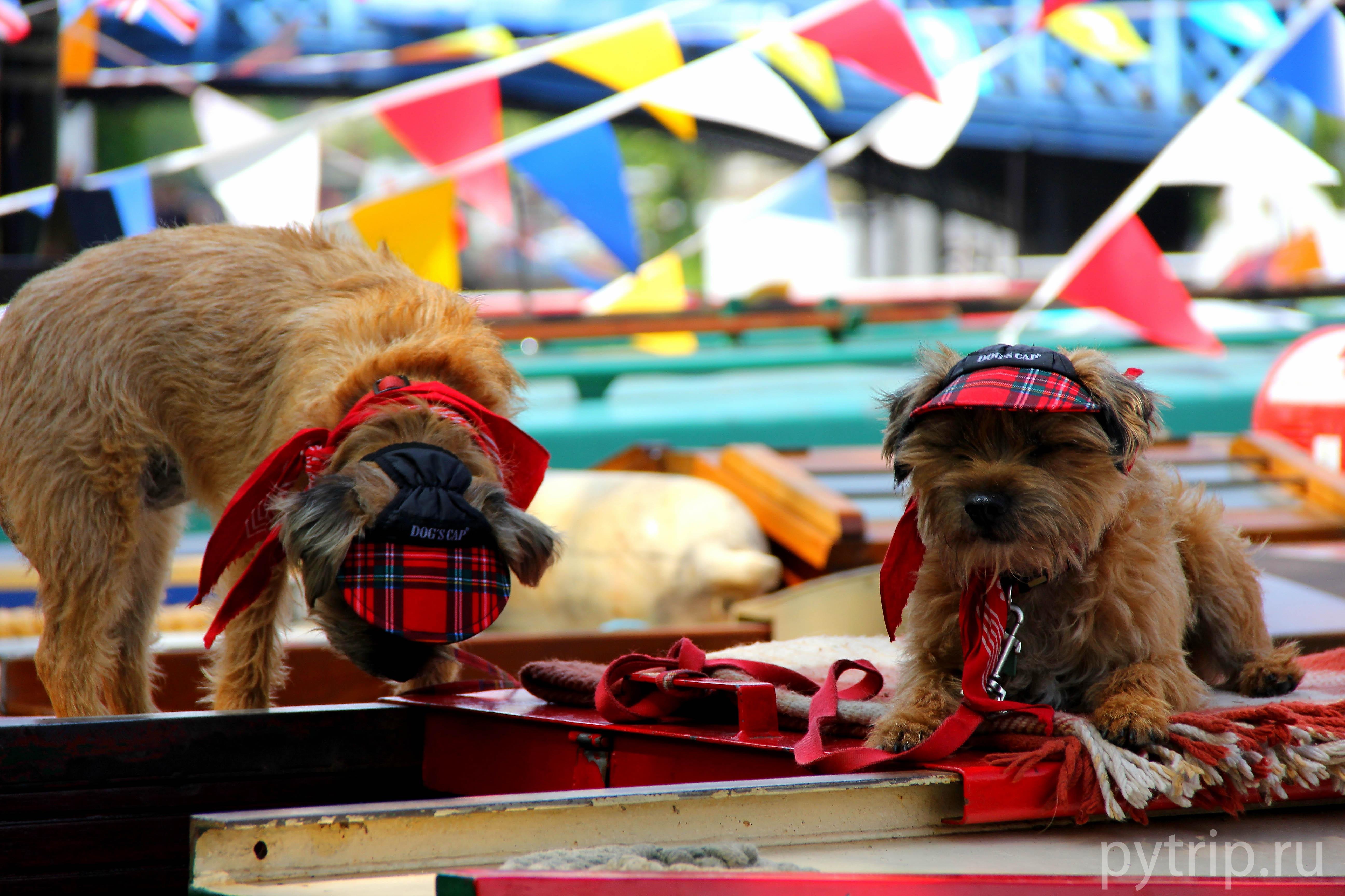 Некоторые жители канала держат собачек, которых также подготовили к фестивалю.