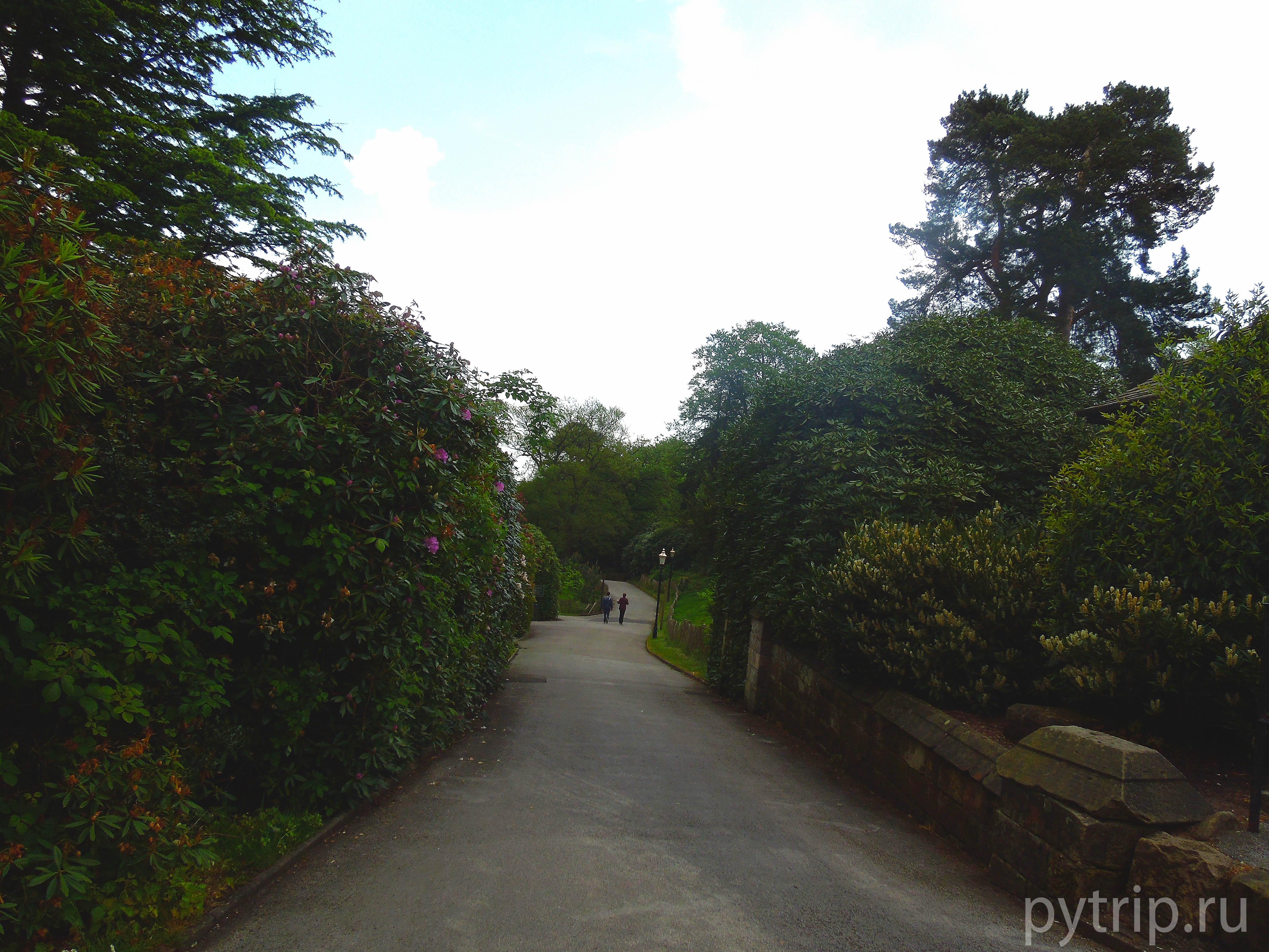 Дорога в сад Alton