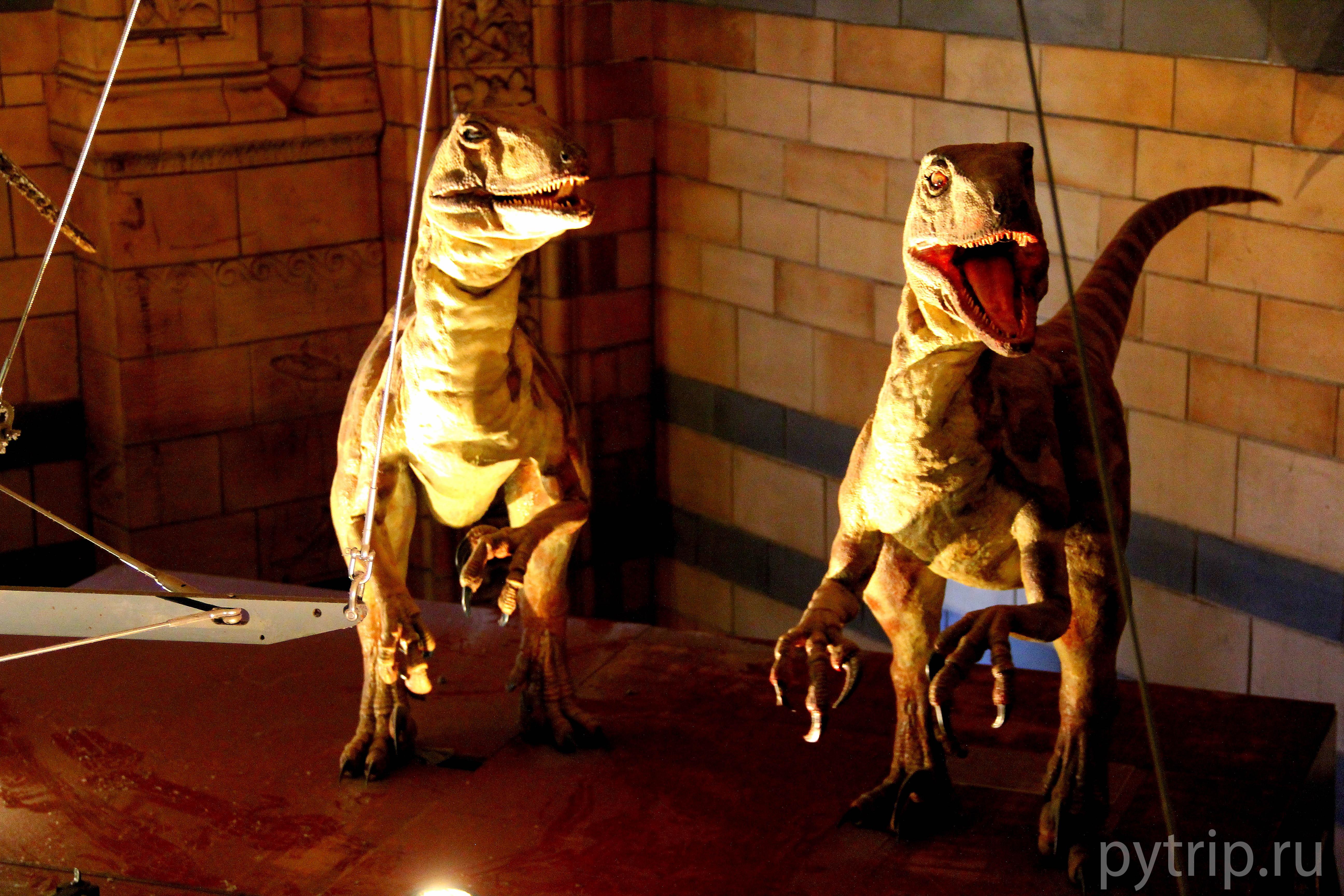 Динозаврики общаются.