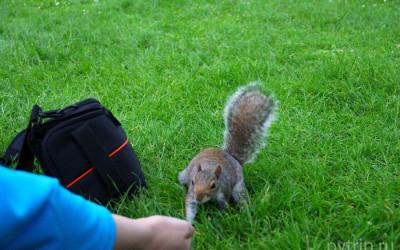 Ридженс парк в Лондоне