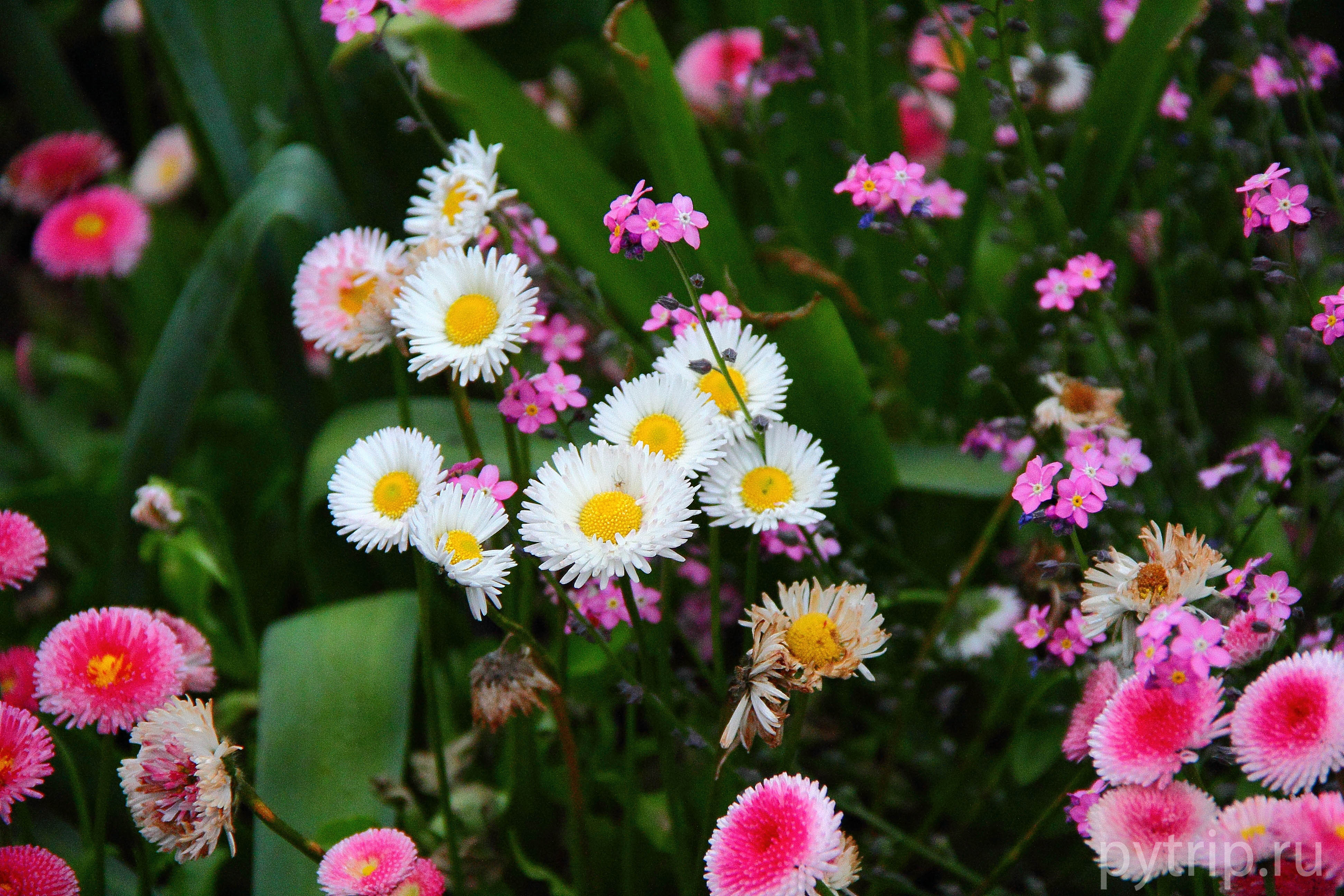 Цветы в Ридженс парке фото