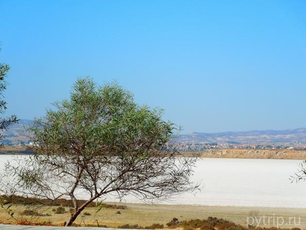 соленое озеро Ларнака