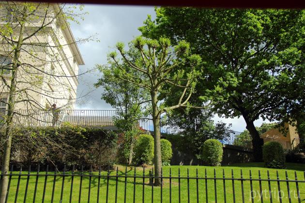 Деревце у канала