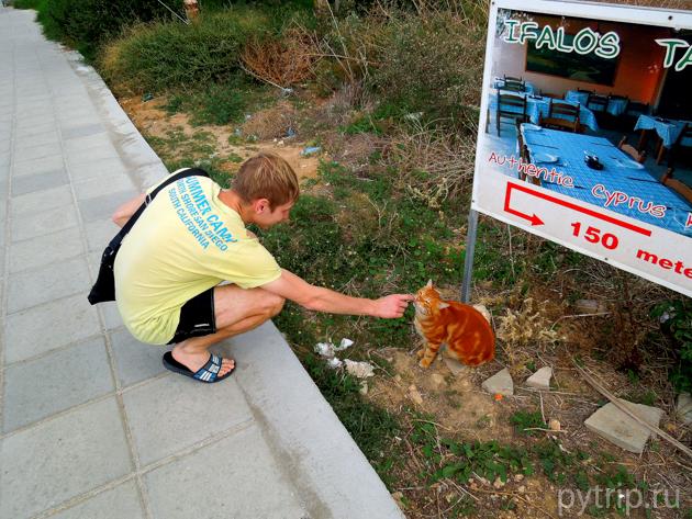 Кипр кот