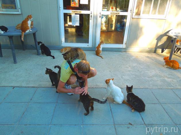 кошачье святилище