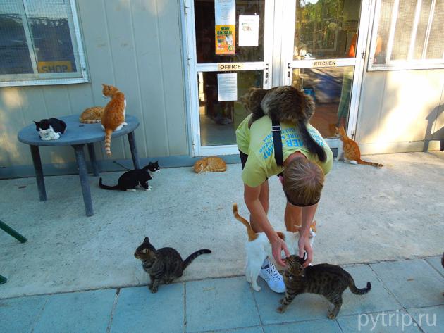 святилище кошек
