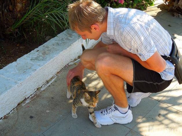 Котенок на Кипре