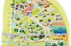 Лондонский зоопарк – царство зверей