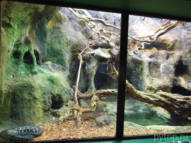 дом рептилий фото