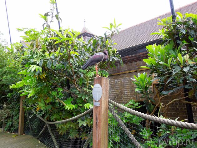 Дом птиц в зоопарке Лондона