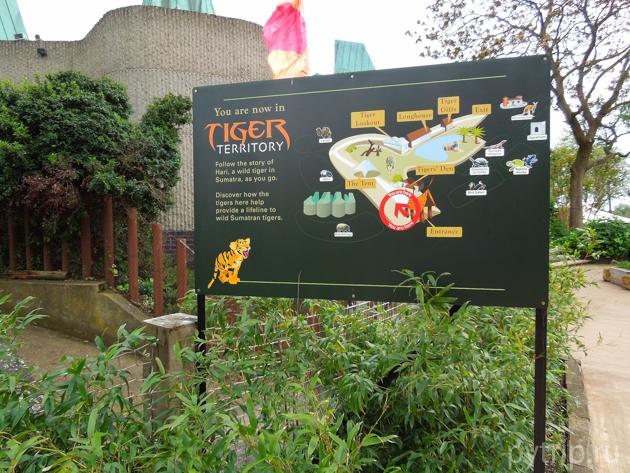 территория тигров