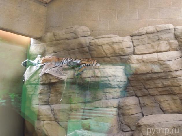 Лондонский зоопарк фото