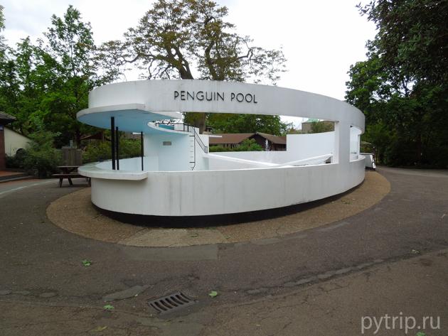 Бассейн с пингвинами зоопарк Лондона