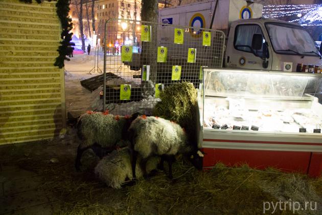 овцы в саду эрмитаж