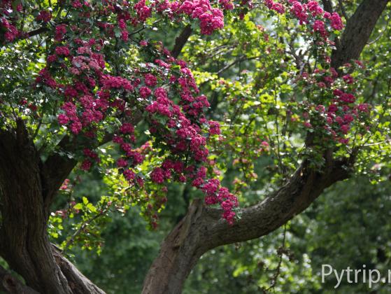 грин парк цветы
