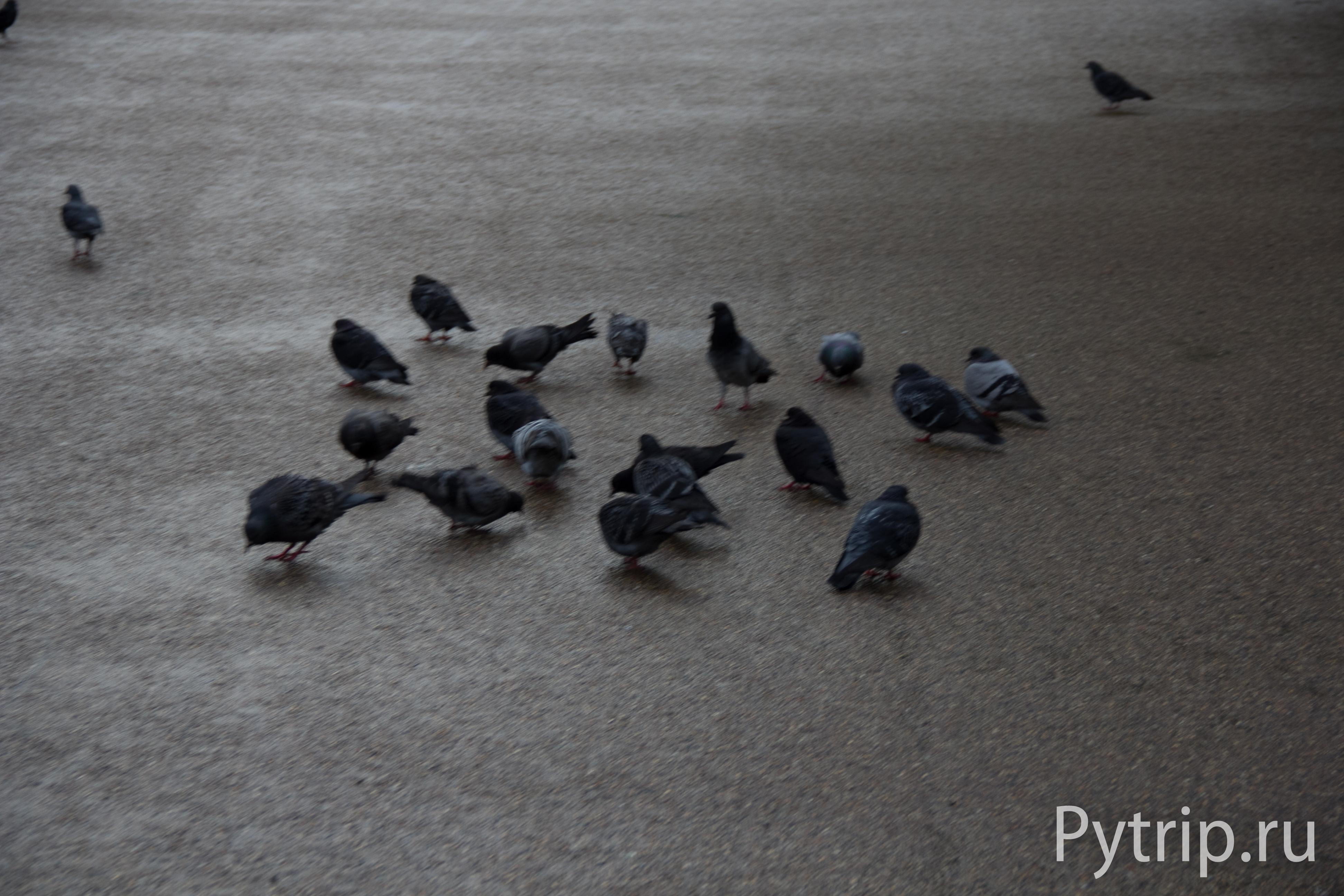 Гайд парк птицы