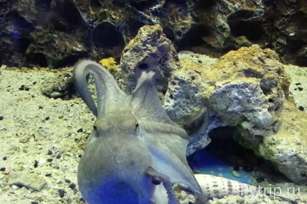 аквариум протараса