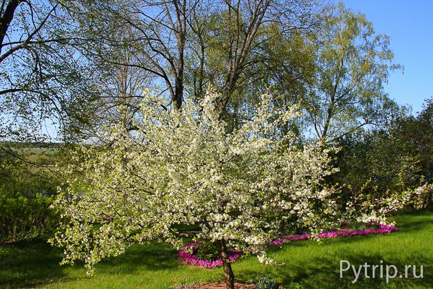 Сад в Михайловском заповеднике