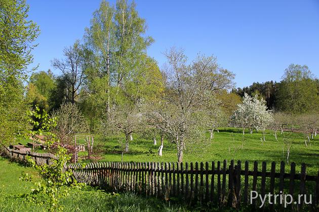 Сад и цветник в Михайловском заповеднике