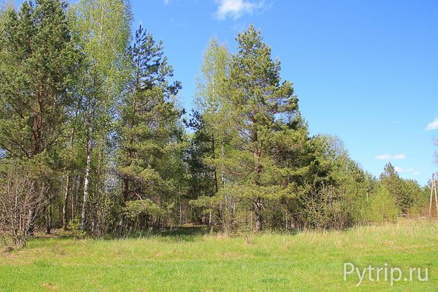 Лес около Шильской ГЭС