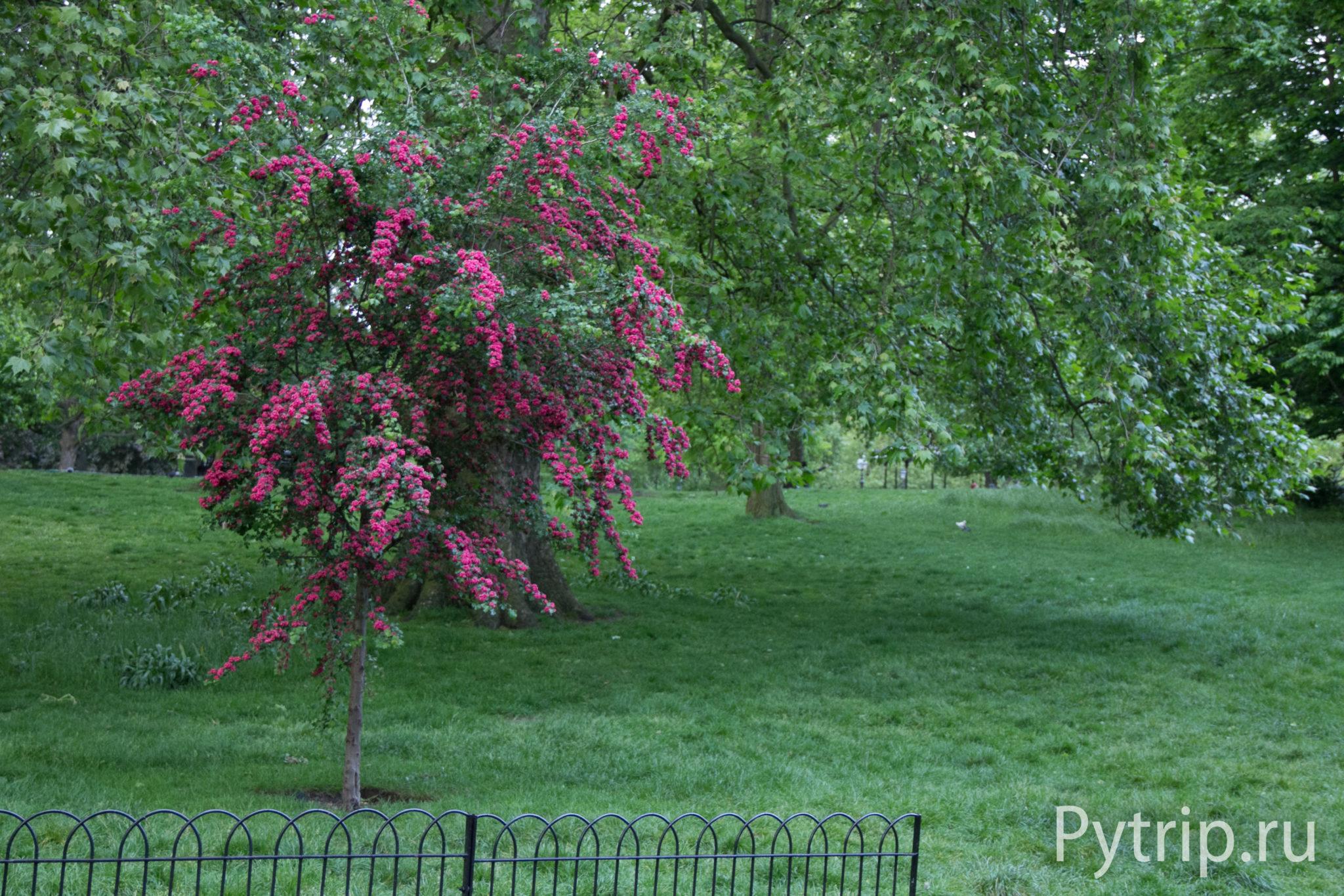 Восьмой день в Лондоне - Гайд парк