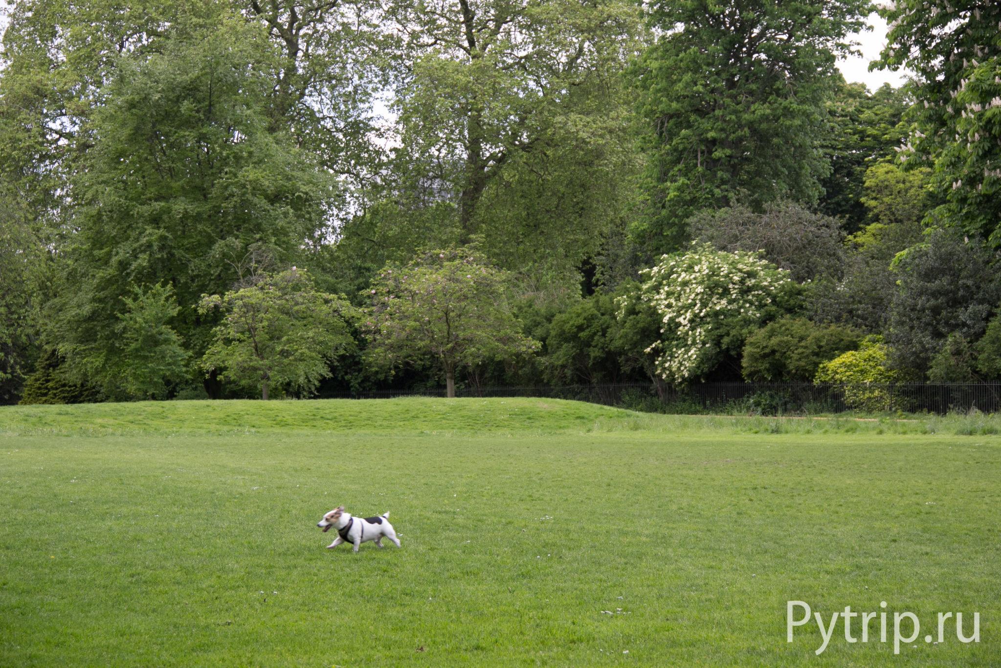 Кенсингтонские сады в Лондоне